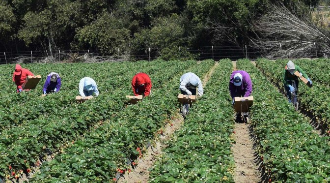 August, 7th, 2020: Florida's Migrant Farm Workers